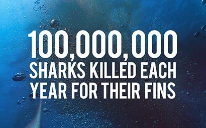 Anti Shark Fin Campaign